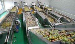 混合型诺丽果汁--果蔬汁生产工艺